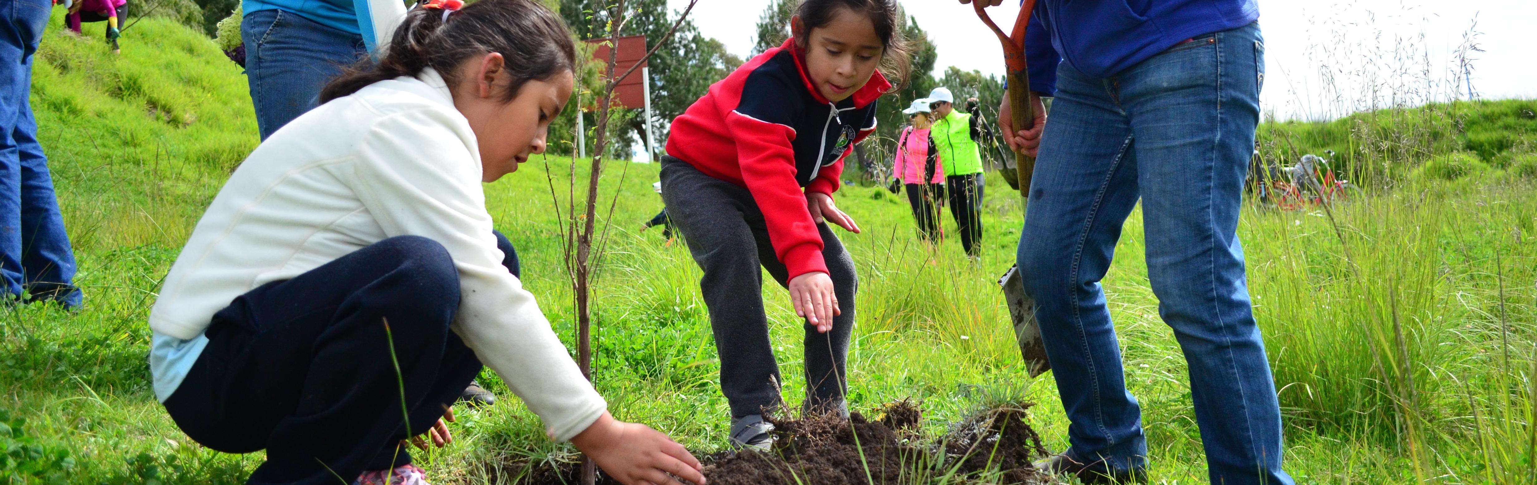 Arborización y Reforestación