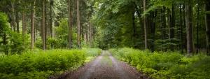 COP 21- El largo camino hacia un acuerdo razonable.